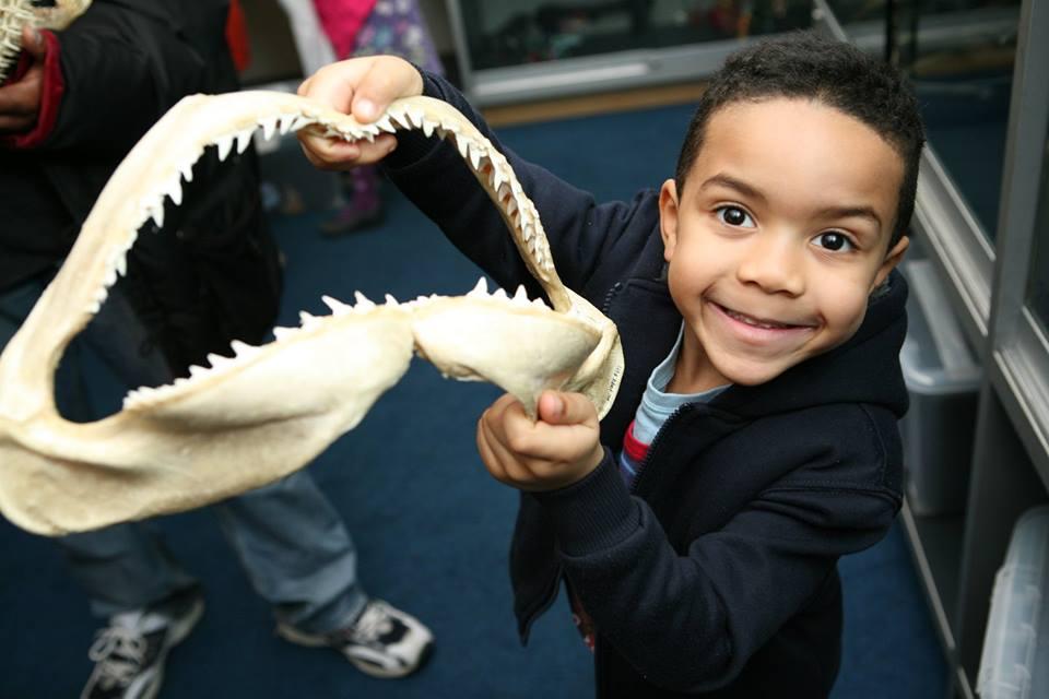criança mostra mandíbula de tubarão no horniman