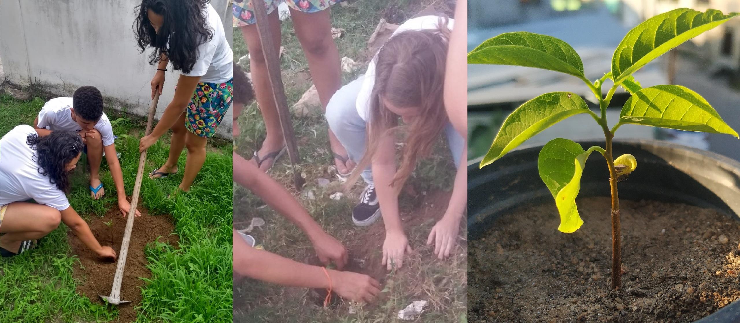 fotos de crianças plantando no projeto arbo